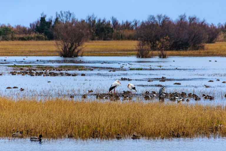 Nature Reserve of the Marshes of L'Empordà